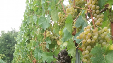 Ecofass: Développer des packagings innovants pour améliorer les ventes de vins régionaux
