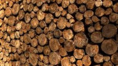 Holz Trub
