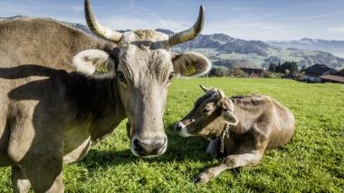 Projekt Milchqualität