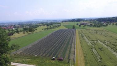 Rückstandarme Obstproduktion - Modellanlagen zur Weiterentwicklung des Integrierten Pflanzenschutzes