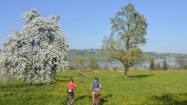 Bewegung & Genuss mit E-Bike in der Region Sempachersee