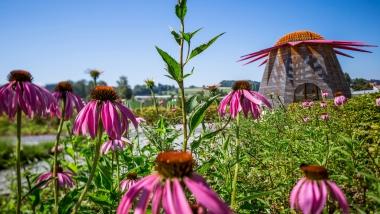 Bodenseegärten – Natur und Kultur im Garten