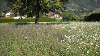 Fleurs locales : Développer une filière de production de semences de fleurs locales